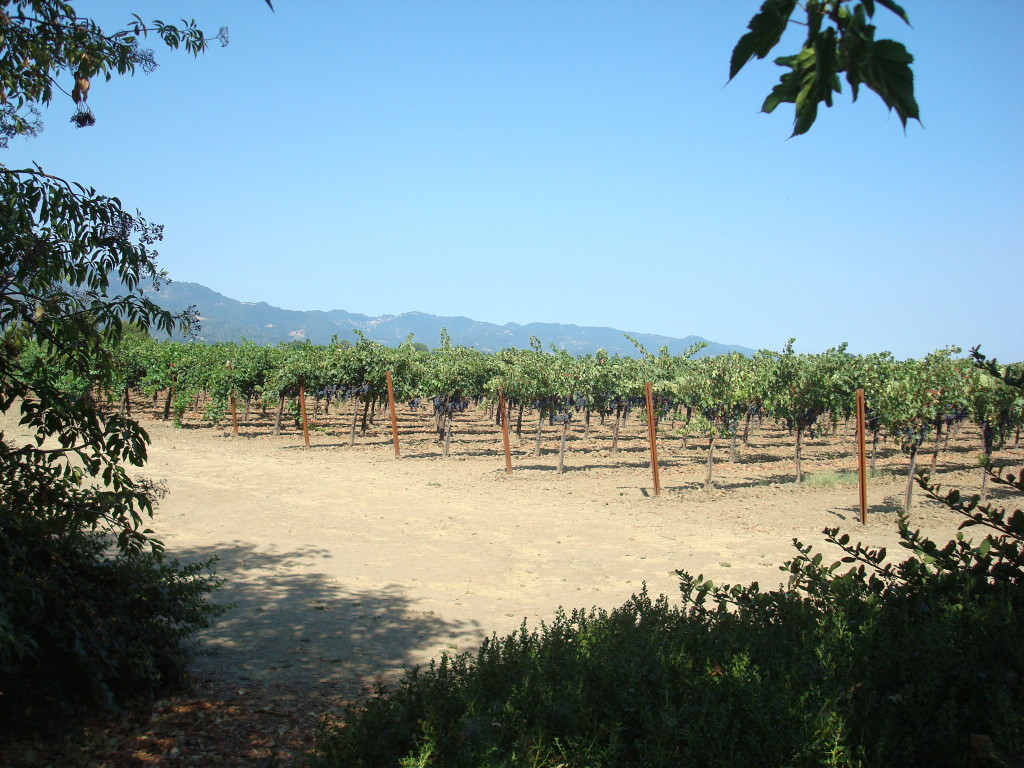 Frog's Leap Winery - The Best Napa Valley Wineries| Three Olives Branch