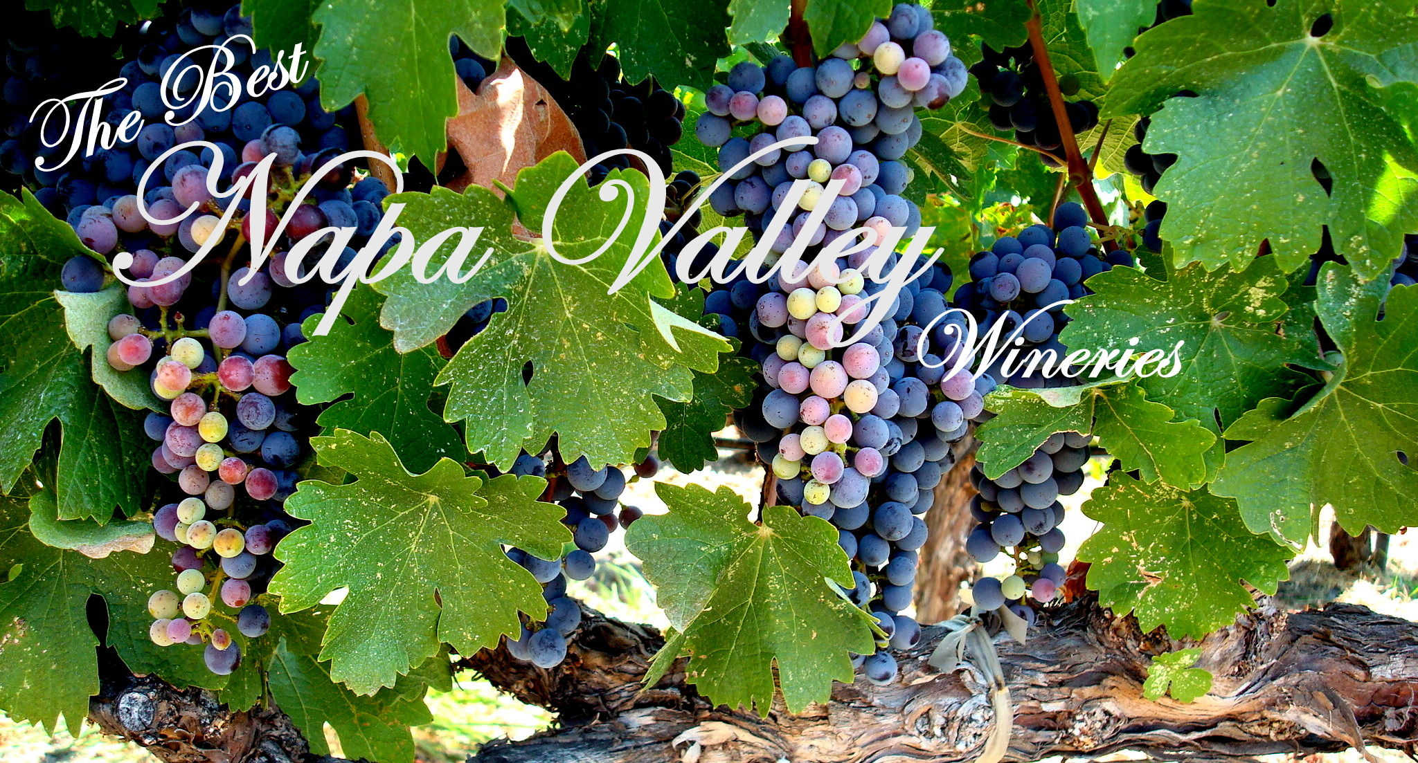 Napa valley wineries three olives branch for Best time to visit napa valley wine country