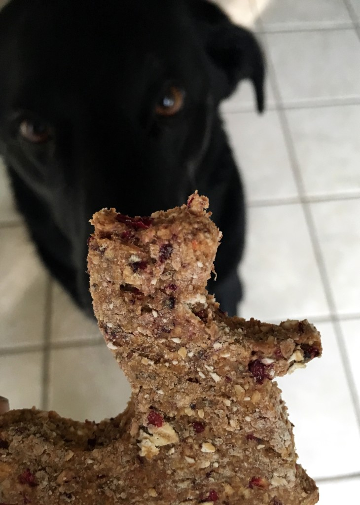 Cranberry, Honey, and Oat Dog Treats