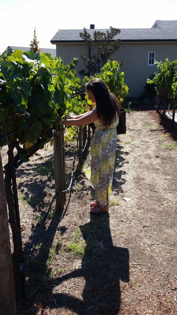 The Best Sonoma Valley Wineries - Kendall-Jackson | Three Olives Branch